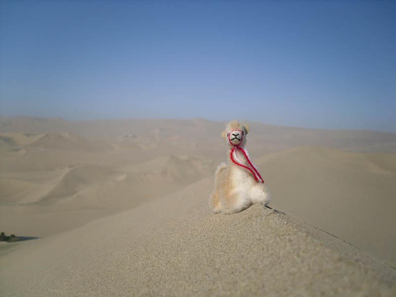 Llama de Arabia
