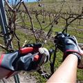 pruning!