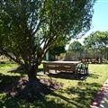 the Vintner's orchard