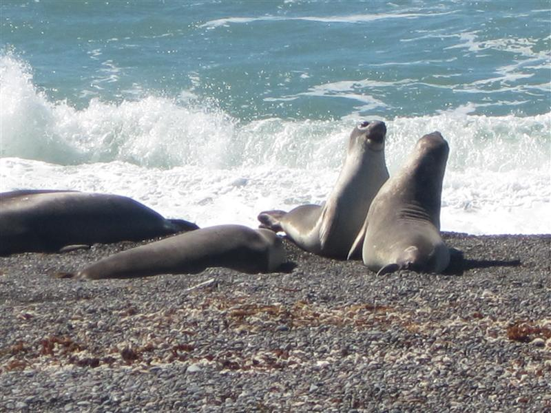 Photo from Puerto Madryn, Argentina