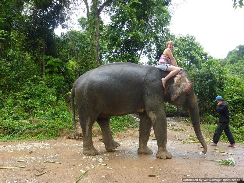 Luang Prabang - Elephant Village