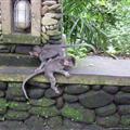 Baby Monkeys!!