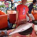 Kota Kinabalu - Fish market
