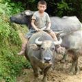 Sapa Trek - Buffalo Cowboy