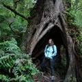 Nik in rain forest