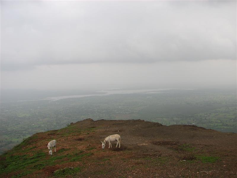 Donkey's view