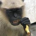Banana good