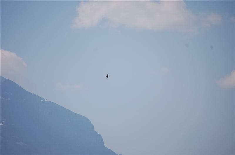Eagle (?) over mountain
