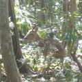 Wild Deer - Jejoe Island