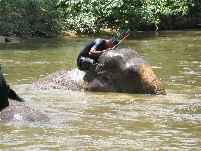 The trainers liked cooling off as much as the elephants