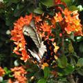 Lots of beautiful butterflies...