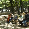 Yoyogi musician