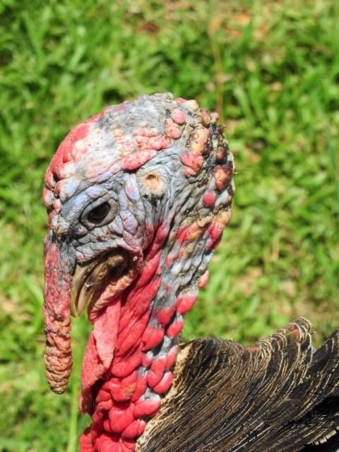 Mmmm Turkey