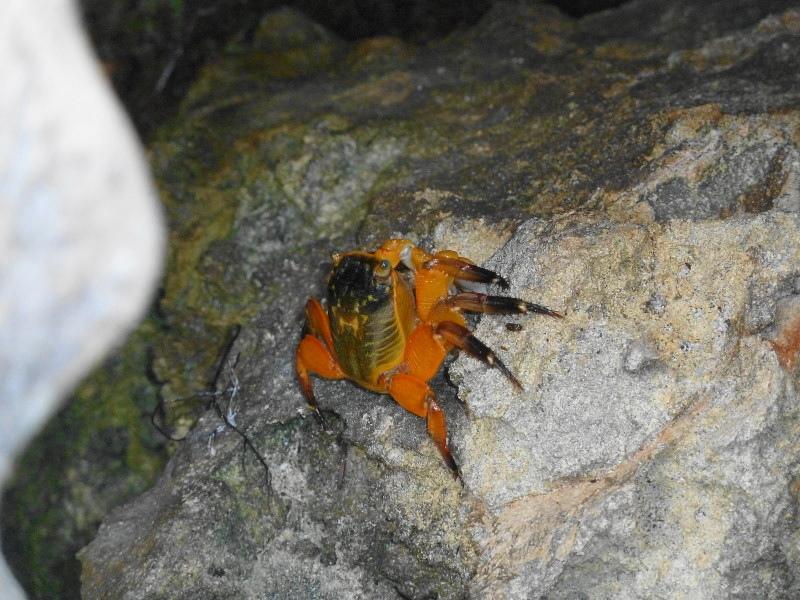 A bright orange crab