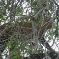 A leopard!!!