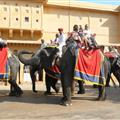 Elephant taxi at Amber Palace