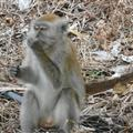 A monkey which looks like it's about to sneeze