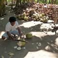 Cutting open the coconuts for us