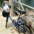 A blind dog on the back of a bike
