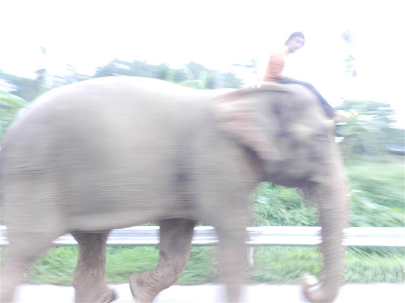 Random elephant on the road