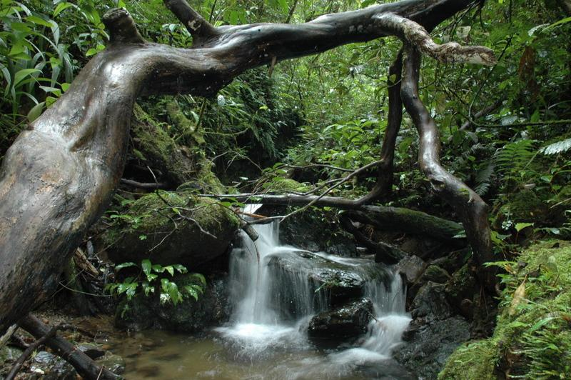 Creek in Rainforest