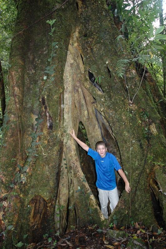 Riesenbaum