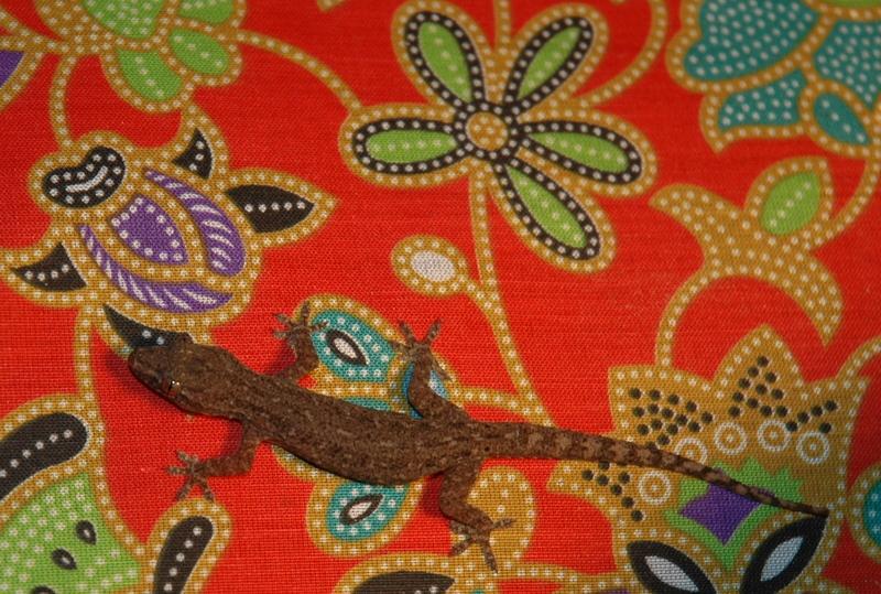 Geckos are cool!