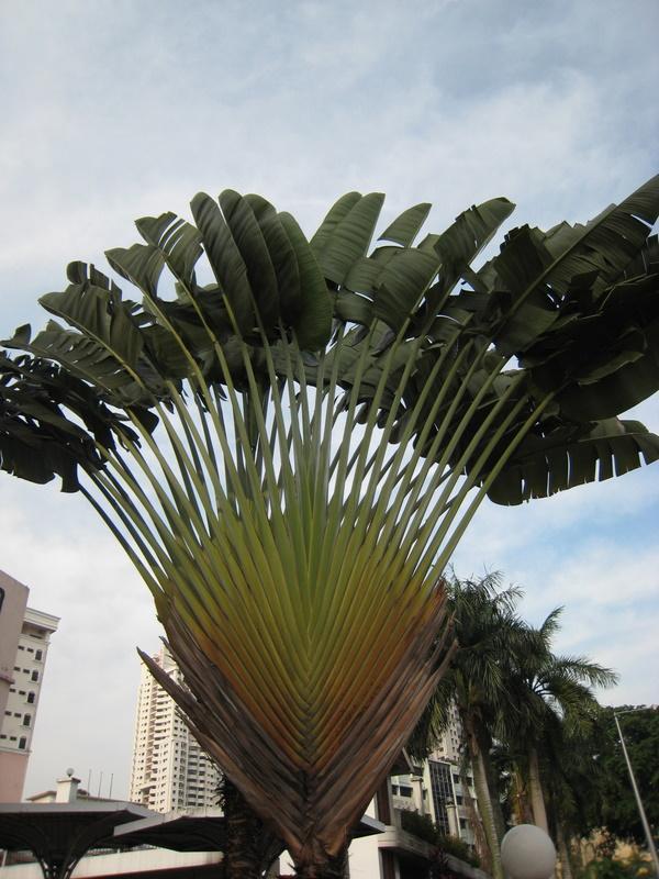 Palmensymmetrie