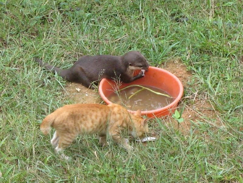 Otter & Cat!