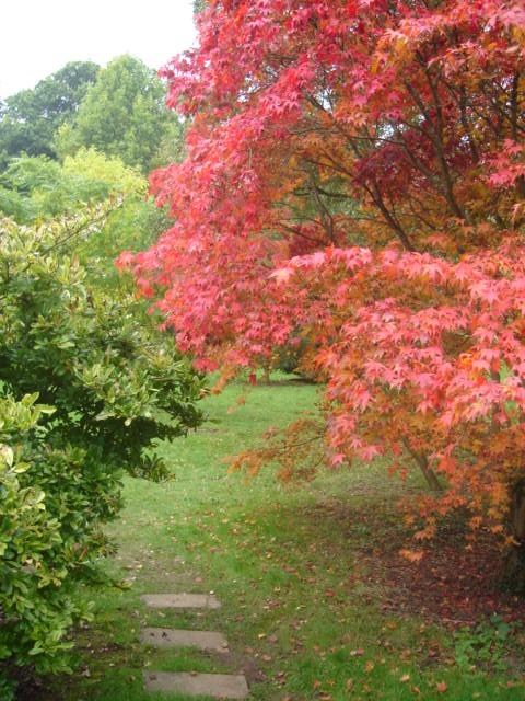Beautiful autumn colour in Moreton on Marsh