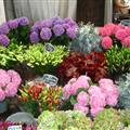 Beautiful floating flower markets