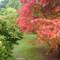 Beautiful autumn colour in Moreton on Marsh