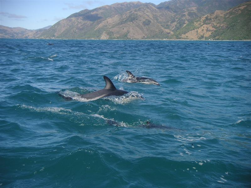 Swimming with these dolphins was soooooo damn amazing! They come so close!