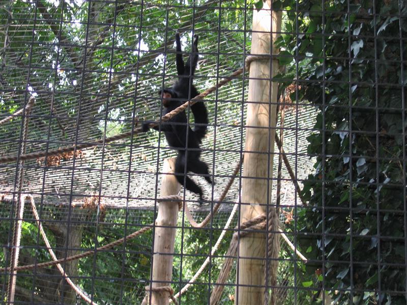 Monkey's in the London Zoo
