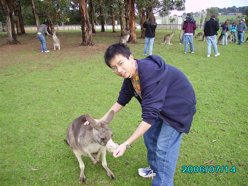 With Kangaroo