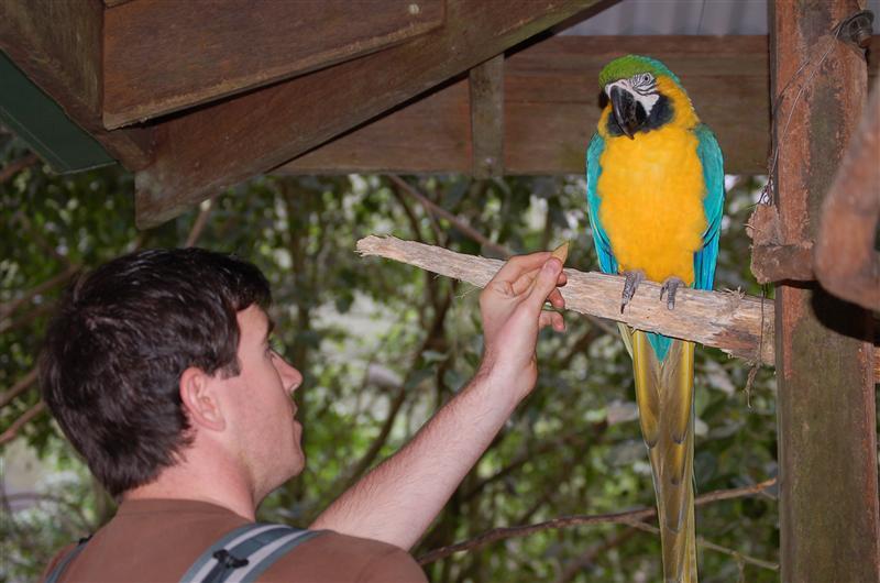 Ollie feeding a parrot