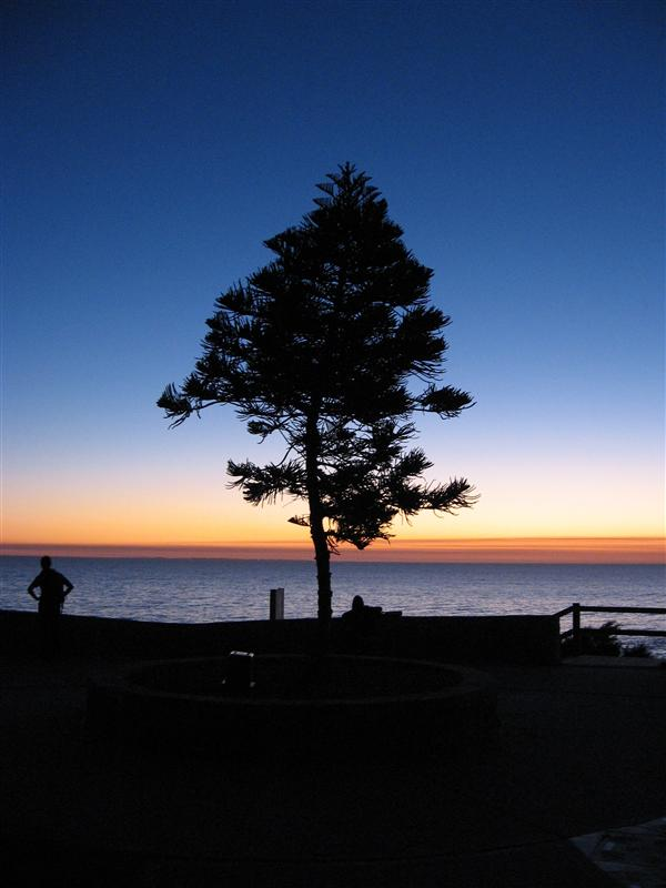 A tree on Cottesloe beach at sunset