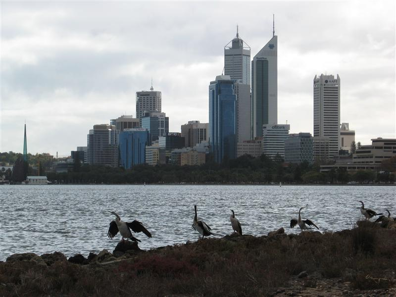 Some more herons (?) across the Swan River from the Perth cityscape