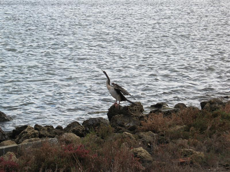 A blue heron, or so we thought. Maybe whoever identifies that weird bird earlier can also clarify this guy's identity.