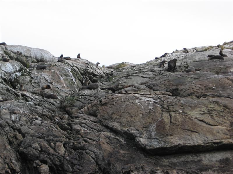 Seals on a big rock
