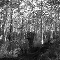 Leeuwin National Park forest in black and white