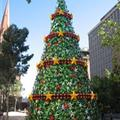 The big Christmas tree in the centre of Melbourne