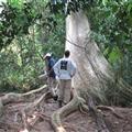 A big tree!