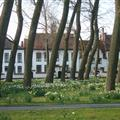 Daffidols & trees!