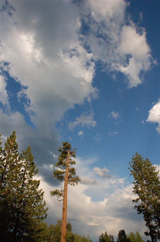Ponderosa sky