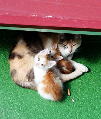 Roof kitties
