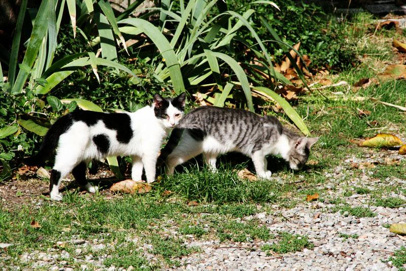 Kitties hanging out in San Quirico d'Orcia