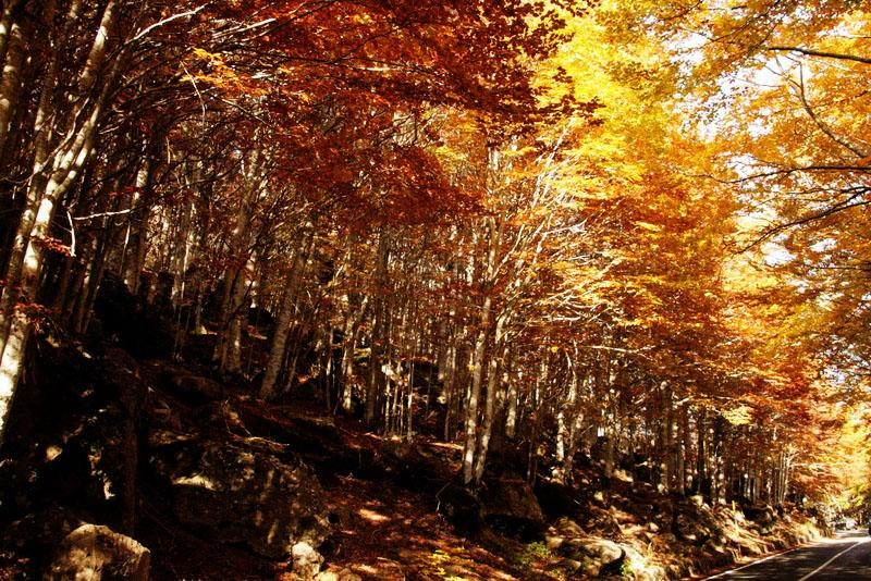 Fall foliage on the slopes of Mont Amiata