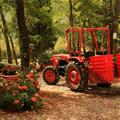 Loading the buckets on the tractor to take them to the vinyard