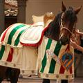 Oca contrade's procession hourse being dressed